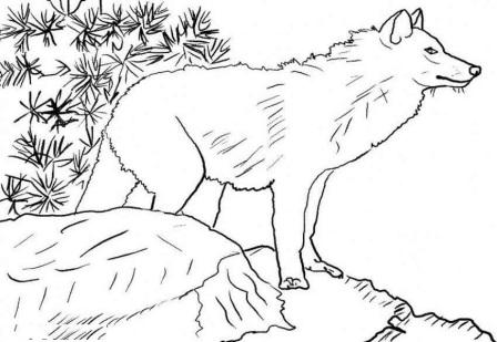 Dibujos de lobos para colorear » LOBOPEDIA